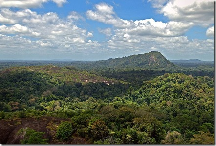 Aerial-view-of-the-Amazon-006