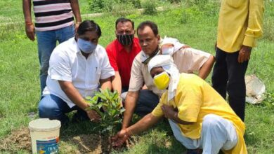 Resolve to save greenery by planting saplings